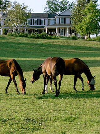 Hershey PA bed and breakfast - Horses and the Westwynd Farm