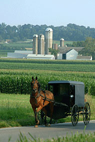 A horse and buggy