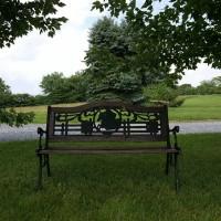 bench-in-grass