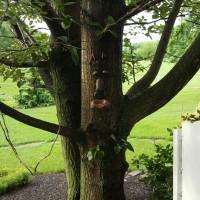 tree-outside-inn