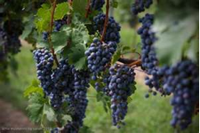 hershey pa getaways grapes