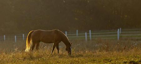 horsehorse