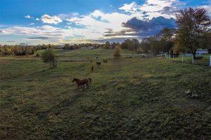 Horses roaming across Westwynd's fields