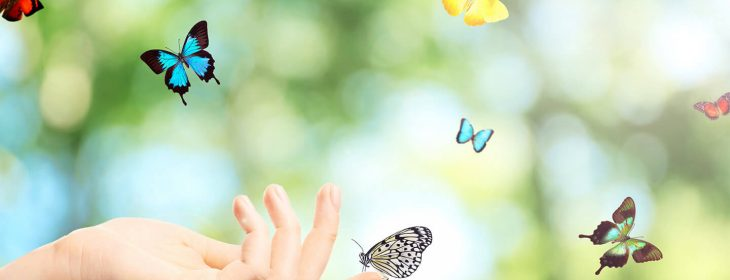 Hand reached out towards butterflies