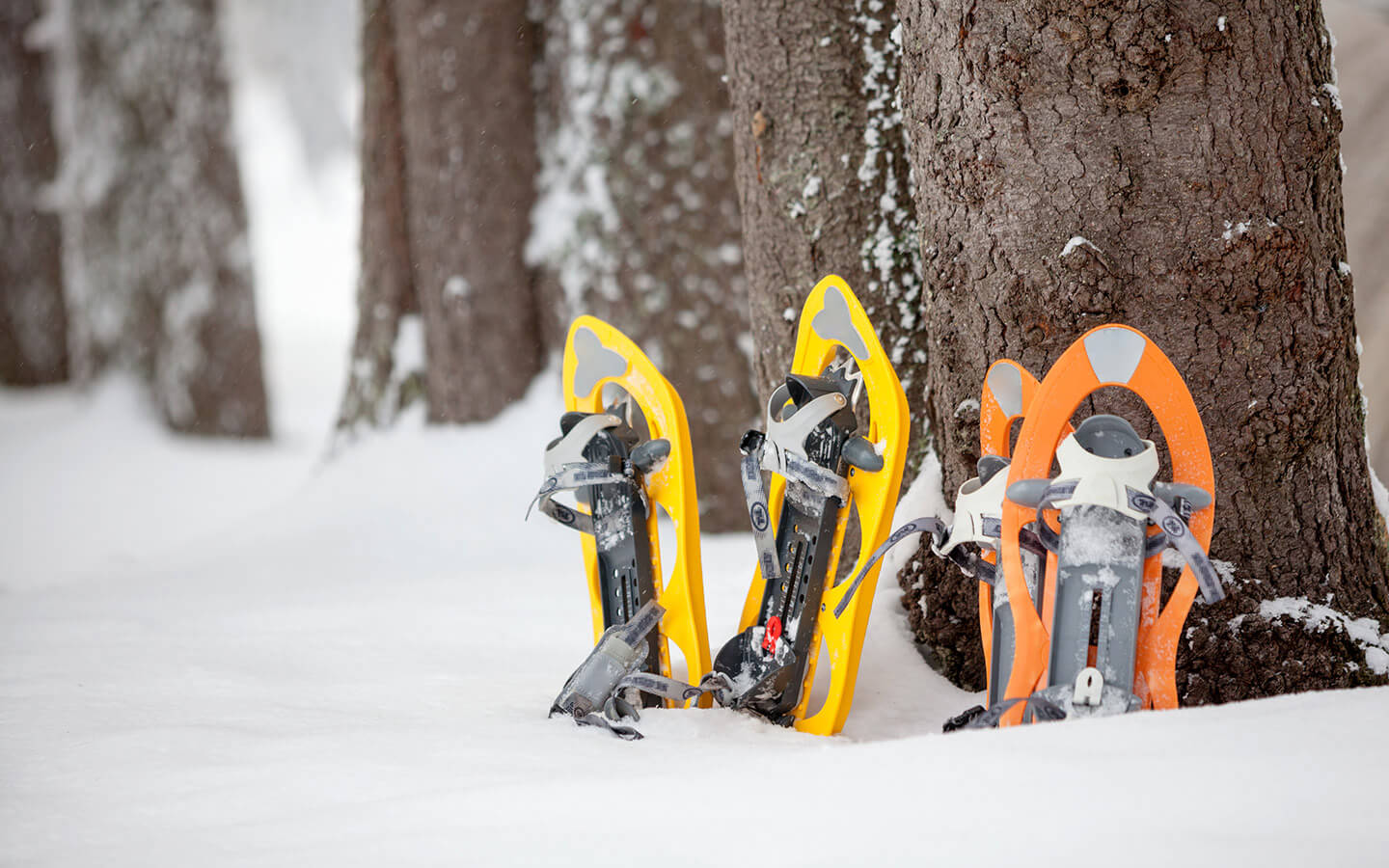 Snowshoes sitting in snow next to tree