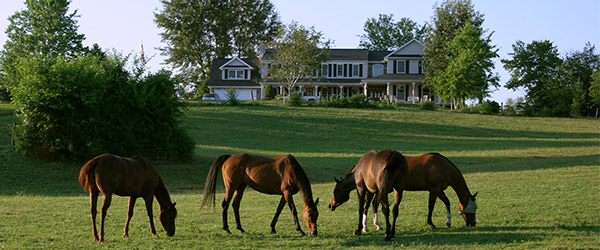 Horses at our B&B in Hershey, PA