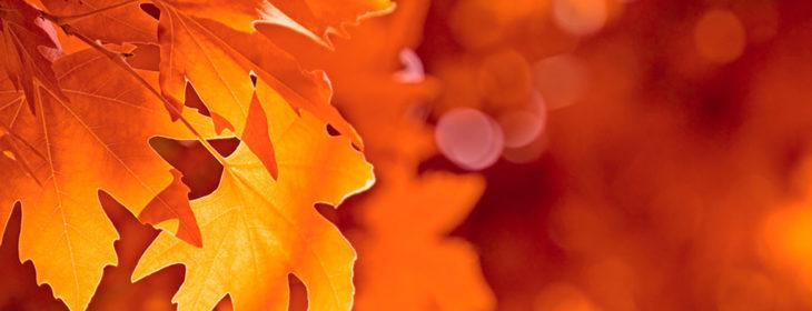Close-up of bright orange leaves