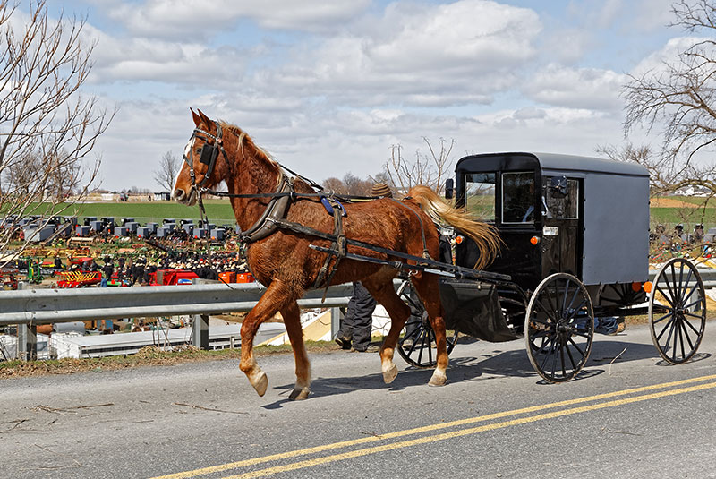 Horse pulling wagon down road in front of festival grounds