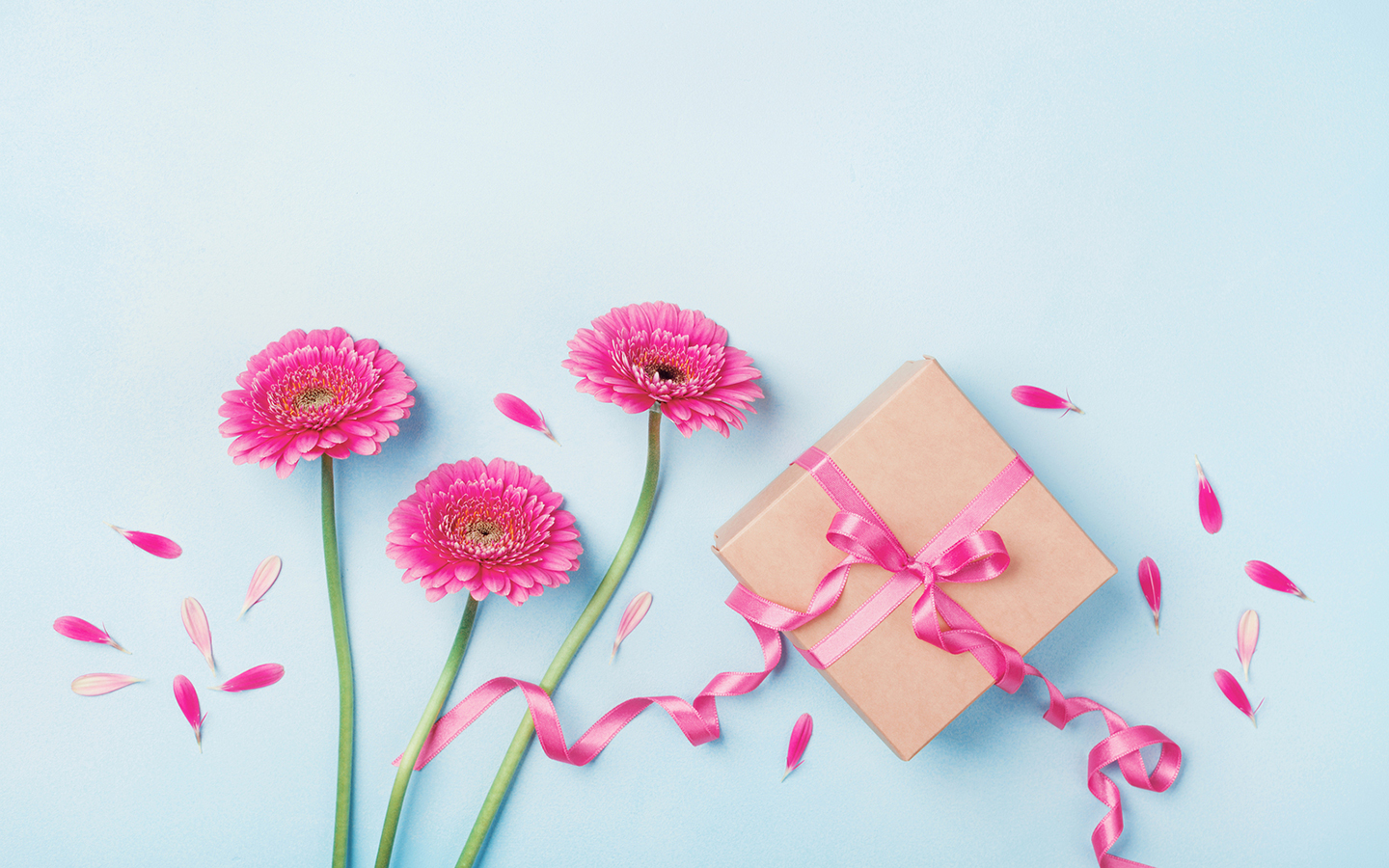 Pink flowers and a wrapped gift