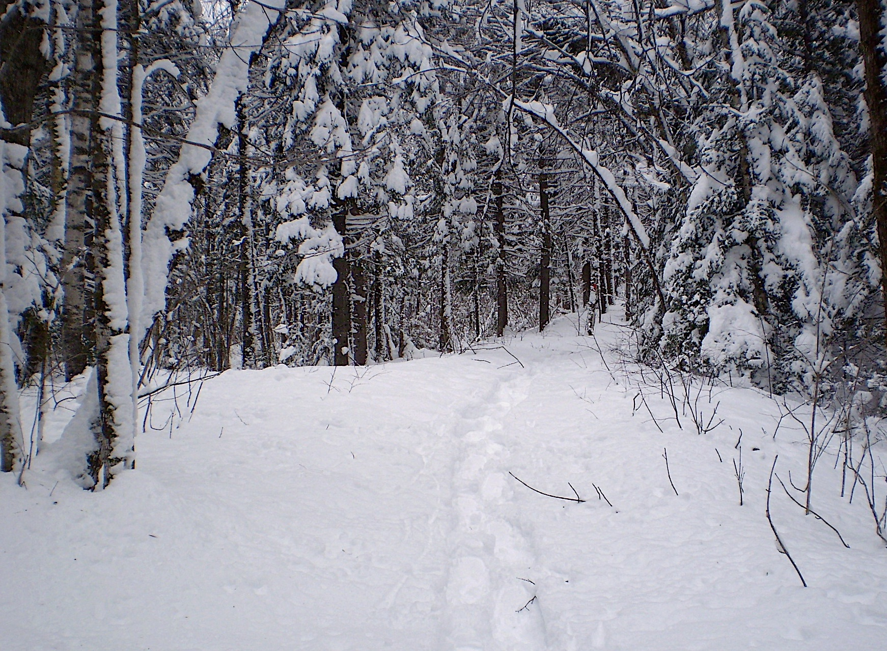 Snowshoe tracks through a snow-covered lane flanked by bare deciduous trees topped with snow