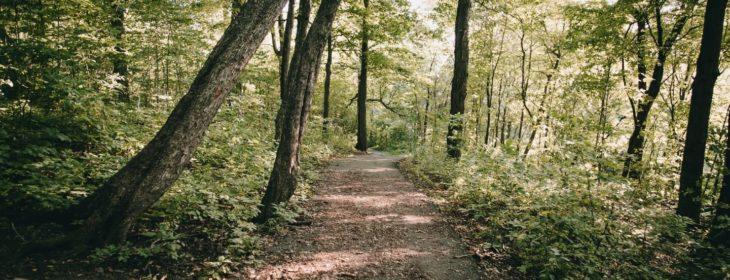 Beautiful hiking trail through dense trees
