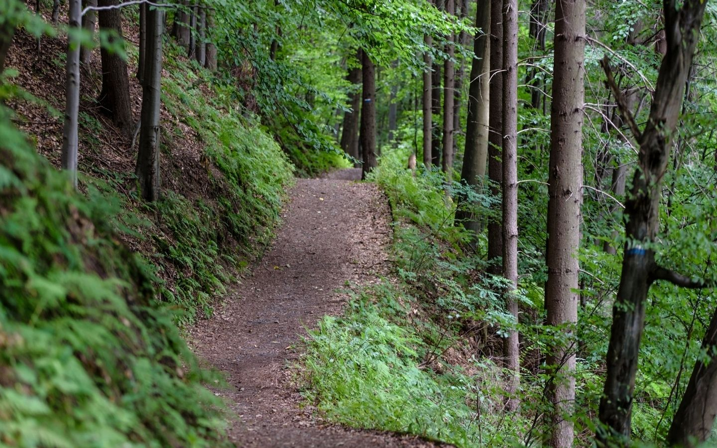 Lush green rolling and winding hiking trail
