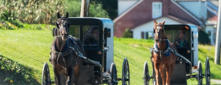 Horse-driven Amish buggies driving down a rolling country road